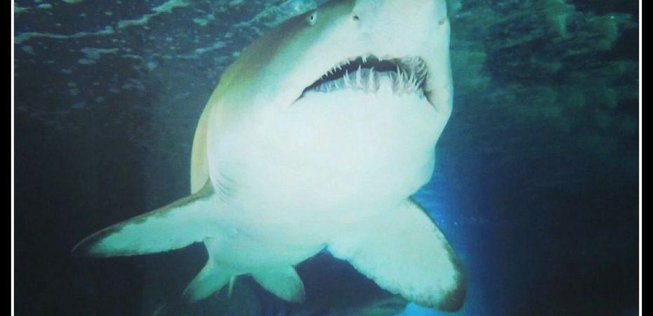 Xtreme Shark Dive Sydney