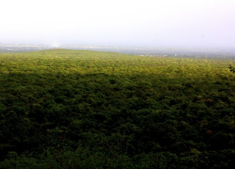 Photo Diary: Satyamangalam Wildlife Sanctuary