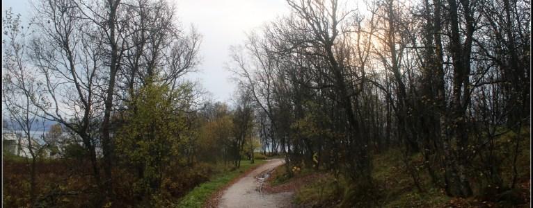 The muddy path!