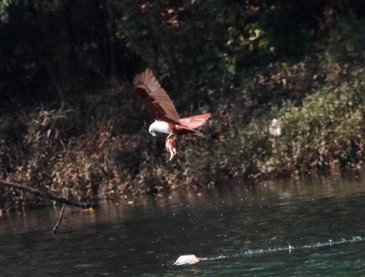 Bird watching at Dandeli