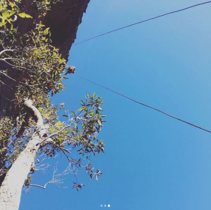 Abseiling in Blue Mountains