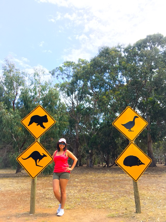 Travel Guide | Kangaroo Island (with 1 day itinerary)