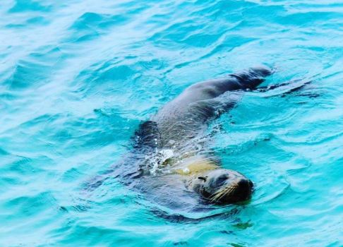 Swimming with Seals (Narooma, Australia)