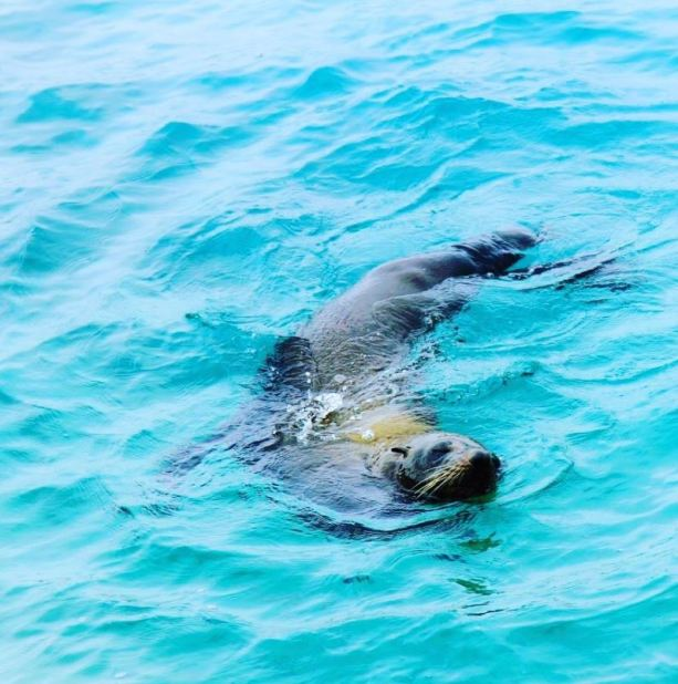 Montague Island - Swimming with Seals