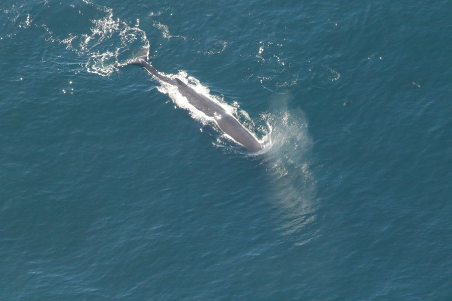 Whale watching scenic flight