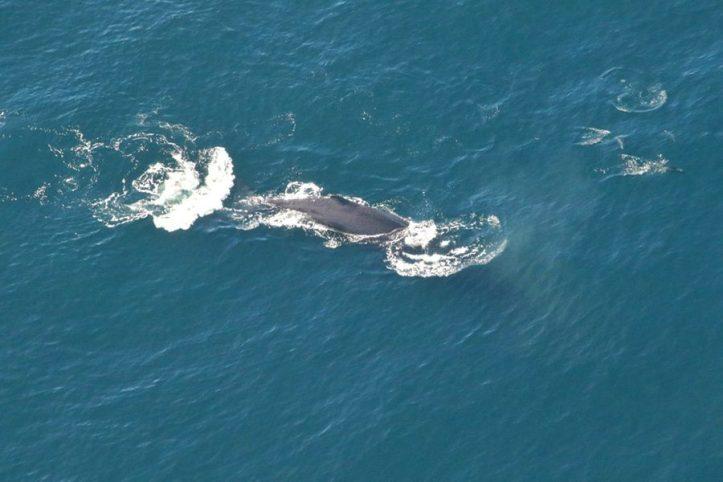 Whale watching scenic flight