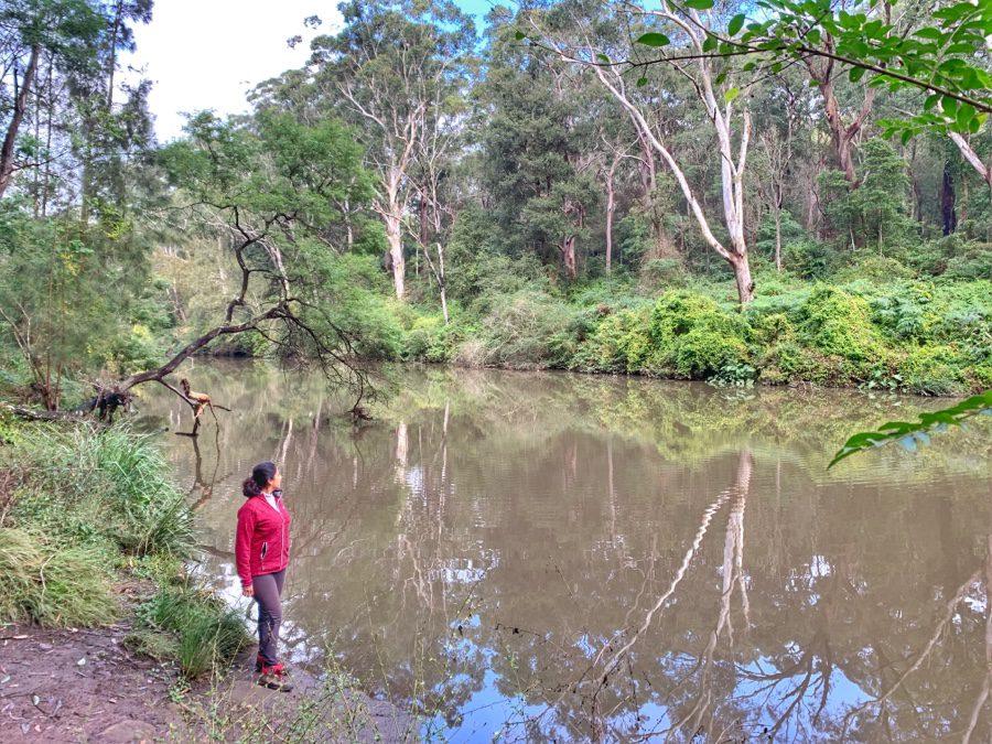 Lane Cove Riverside Walk (Sydney)