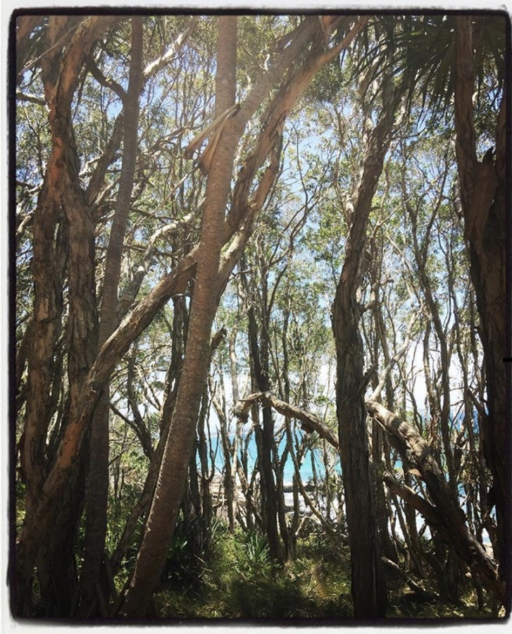 Travel Guide: Noosa Heads