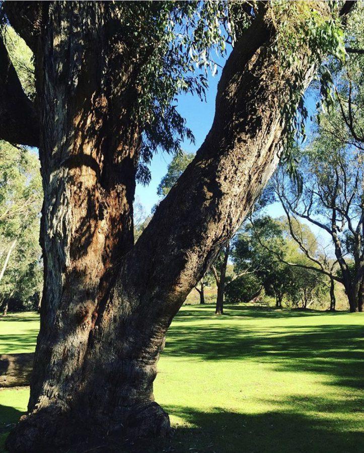 Perth and Pinnacles