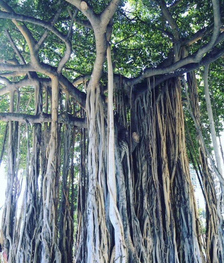 Travel Guide | Honolulu & Big Island (includes 4 days itinerary)