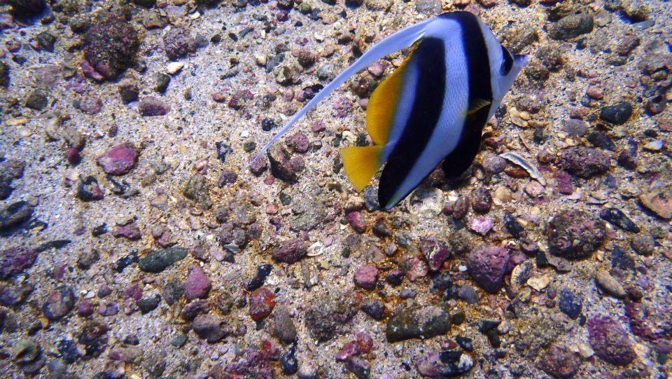 Scuba diving in Netrani Island (Karnataka, India)