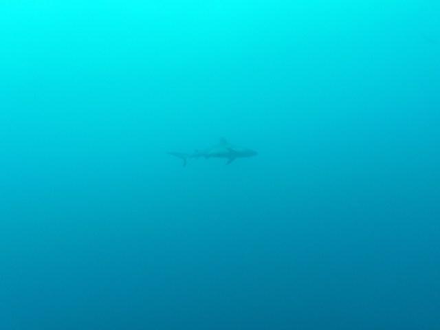 Fishes | Maldives