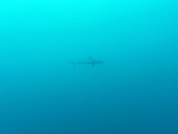 Fishes   Maldives