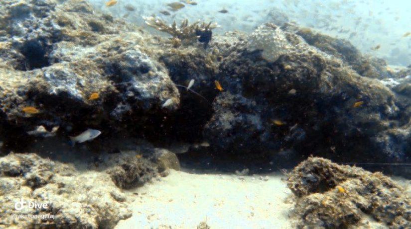 Scuba Diving in Neil Island