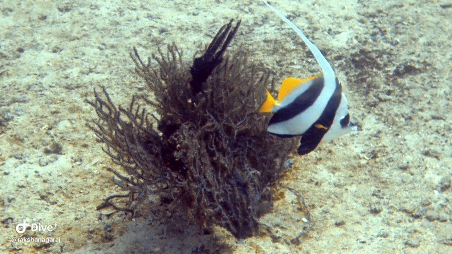 Scuba diving in Neil Island | Andaman Islands