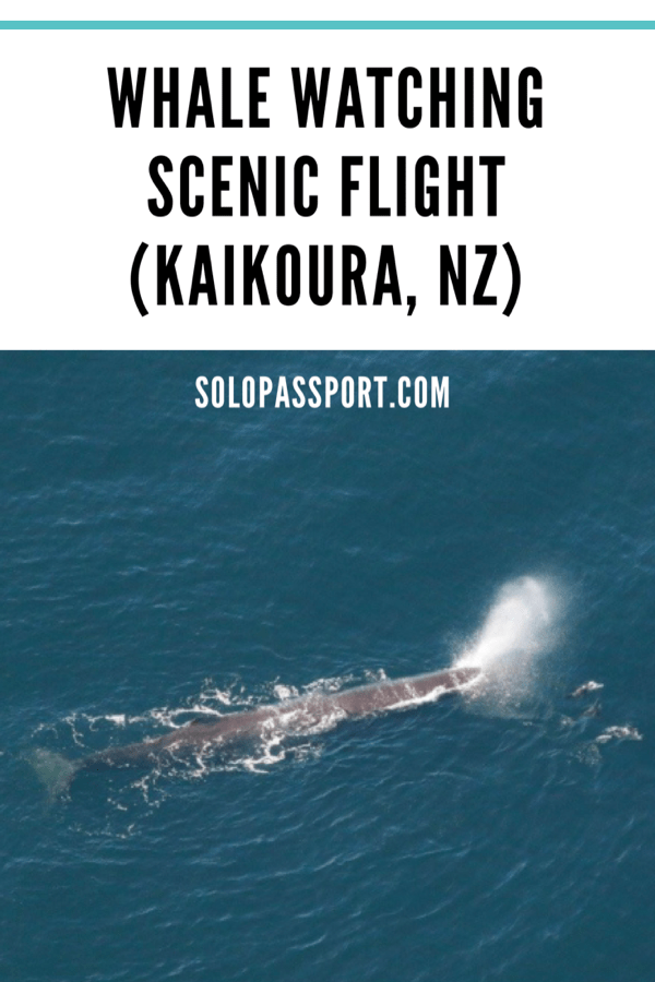 Whale watching scenic flight (Kaikoura)