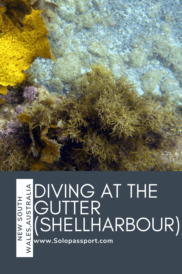 PIN for later reference - Diving at The Gutter, Shell Harbour