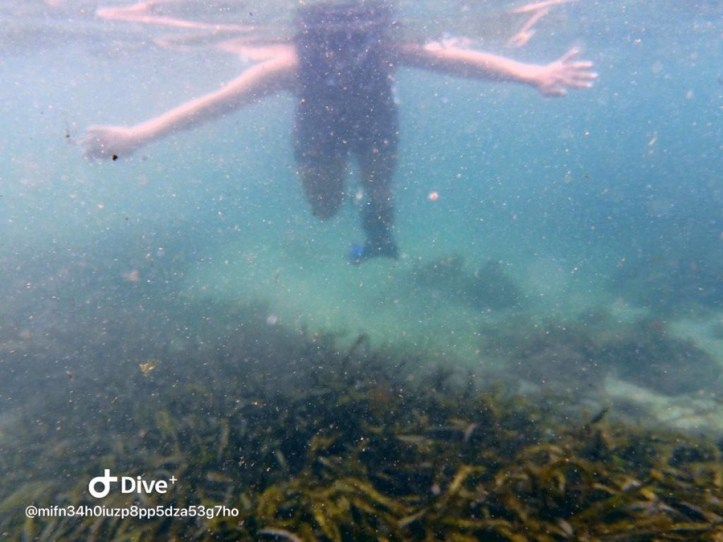 Snorkeling at Bushrangers Bay in Shellharbour