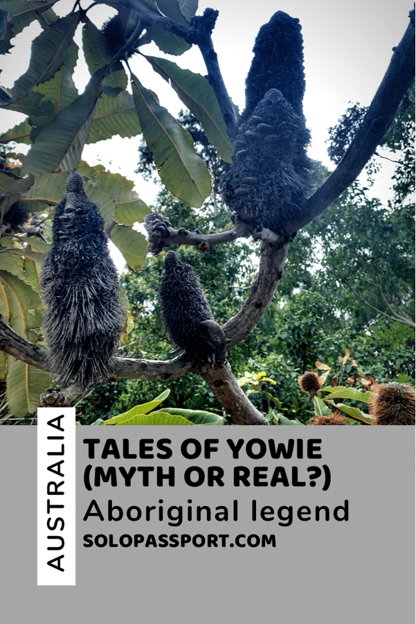 PIN for later reference - Tales of Yowie | Myth or Truth?