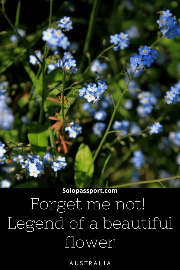PIN for later reference - Forget me not flower
