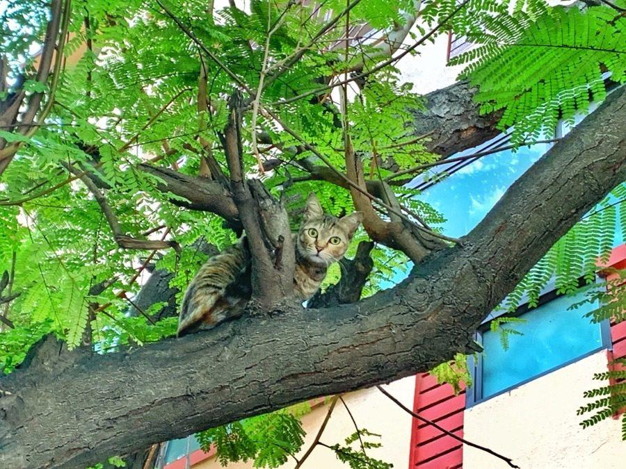 Cat at Malleswaram, Bangalore