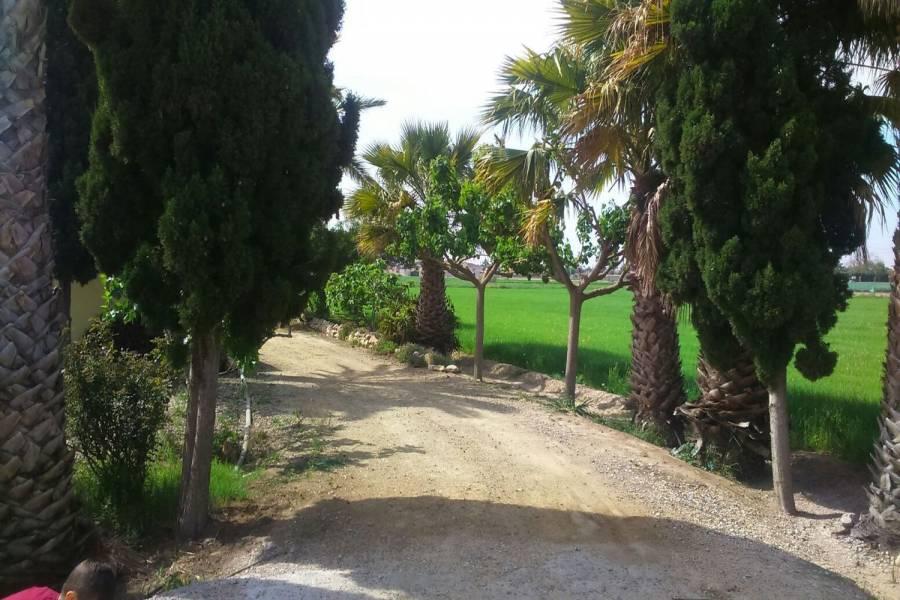 Catral,Alicante,España,Lotes-Terrenos,26903