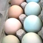 Eggs at Portland Farmers Market