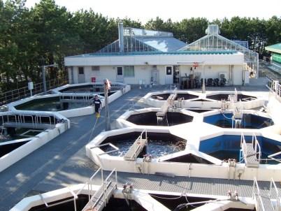 Eel Farming in Hamamatsu, Japan