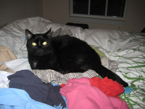 Mickey on Her Favorite Bed - Clothing Fresh Out of the Dryer