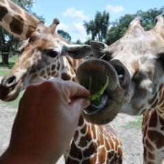 Florida Travel: Exotic Safaris Without a Passport