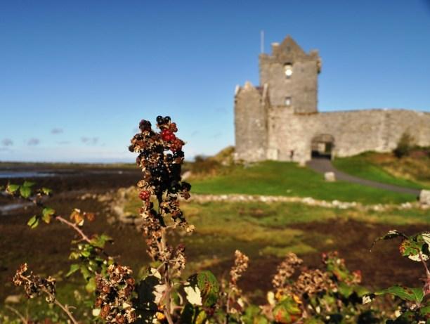 Blackberries Were in Season during My Trip to Ireland