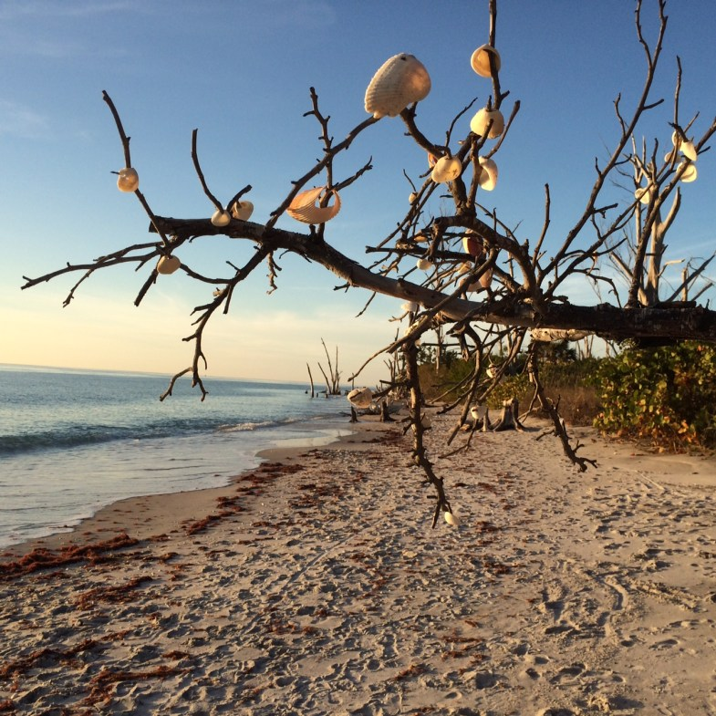 Finding Peace and Solitude at Stump Pass Beach State Park, Dec. 28, 2014