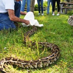 Outdoorswoman Journal: 2016 Python Challenge In-Person Training in Big Cypress
