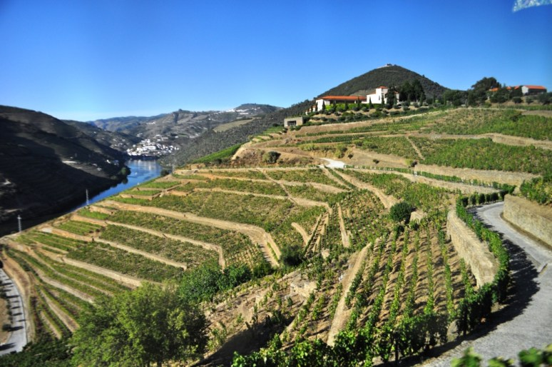 Portugal's Scenic Douro Valley. I Visited It In 2015 When I Cruised Solo With Viking Cruises.