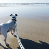 Pawtastic Fun on One of St. Augustine's Dog-Friendly Beaches and Beyond