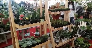 Pameran tanaman hias di Solo Square tanggal 12 hingga 21 Maret 2021