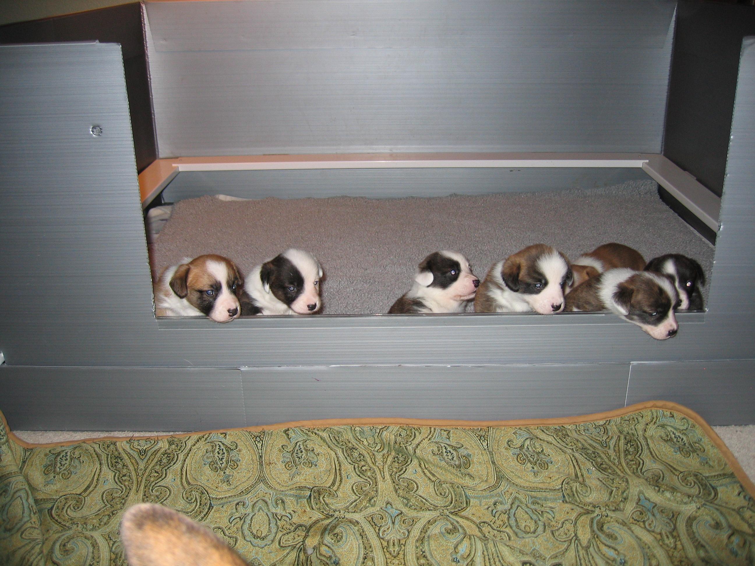 pippins-pups-021