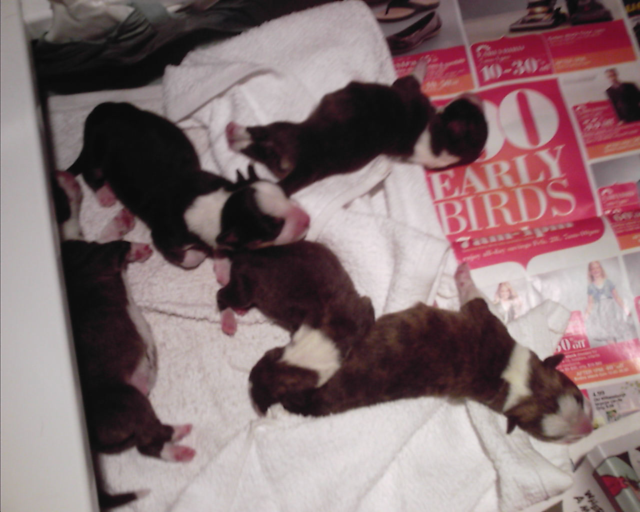 pups-march-1-002