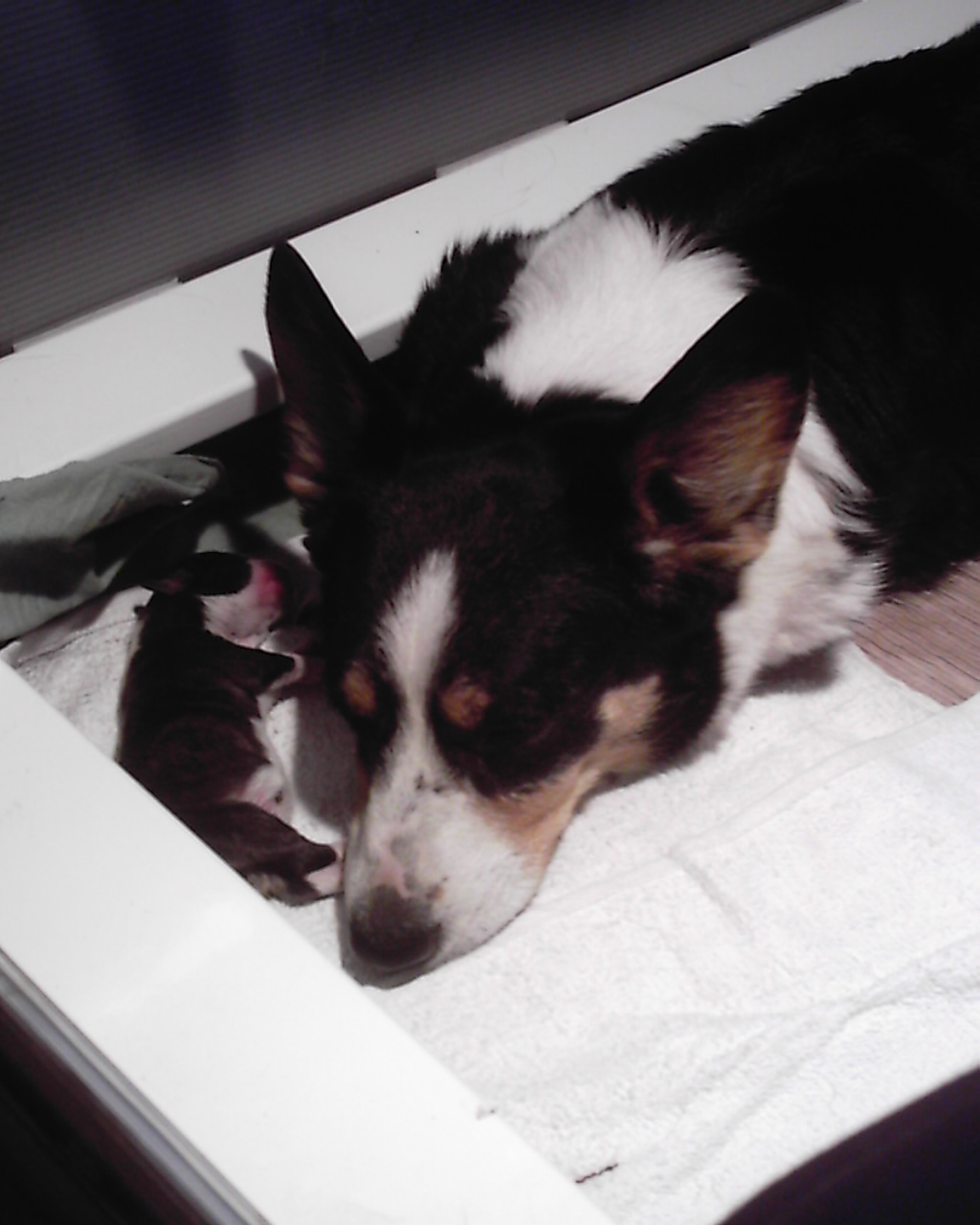 pups-march-1-008