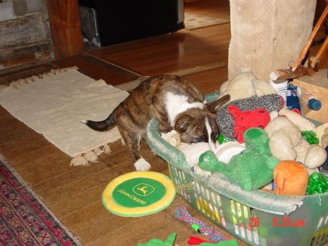 zippy ears and toys