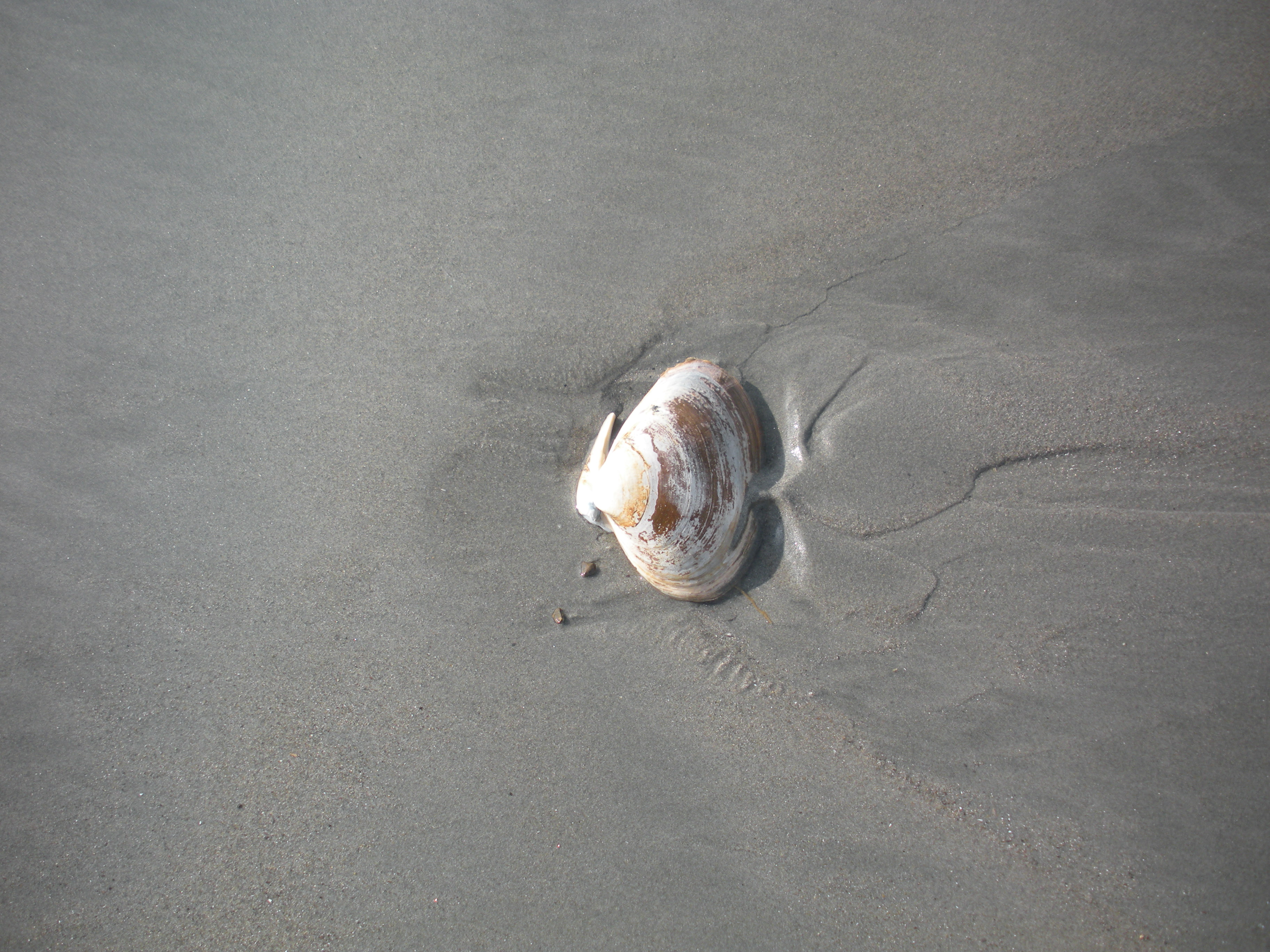 I saved this one, more clams for me!