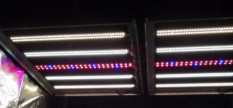 SolStix Rack with red-blue strip