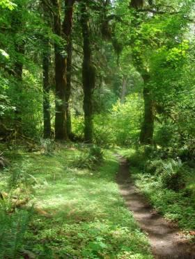 hoh-trail-Jerry-Attrick_sxc_bx