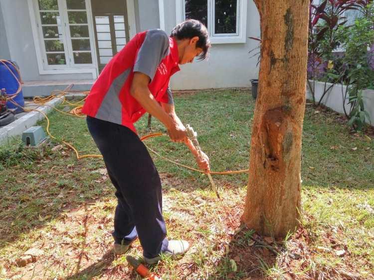cara membasmi rayap alami