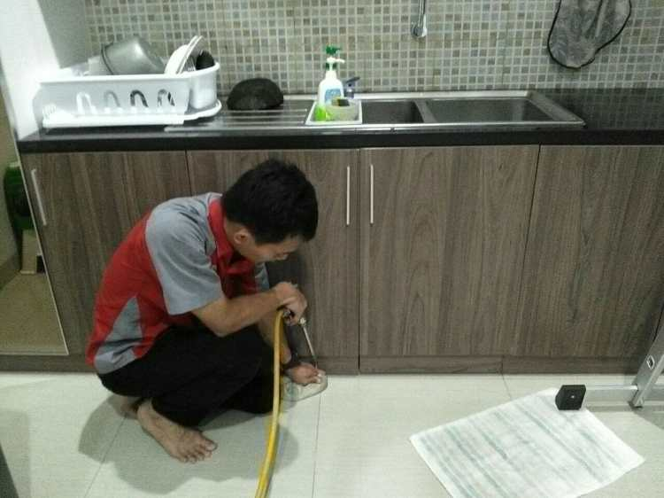 cara membasmi rayap dengan alami