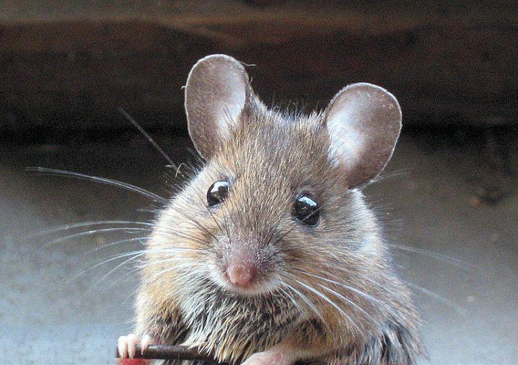 Jasa anti tikus