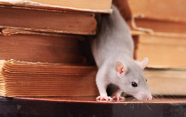Pengusir tikus di jakarta utara