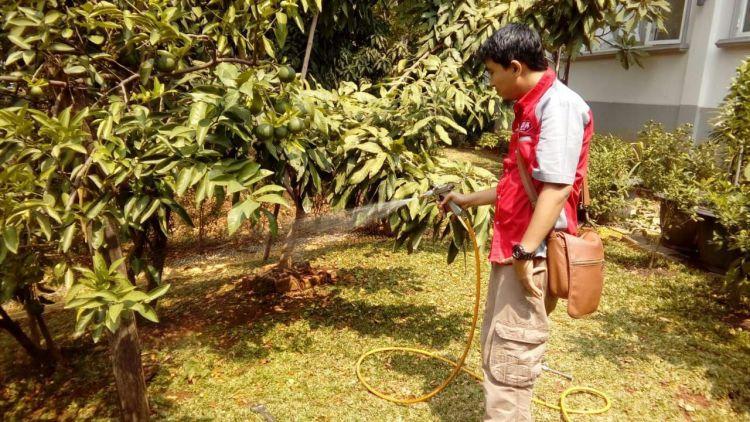 Bahaya yang Ditimbulkan Membunuh Kecoa