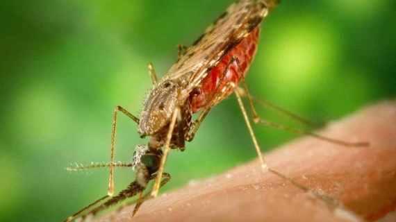 Penyakit Malaria dan Cara Penyebarannya