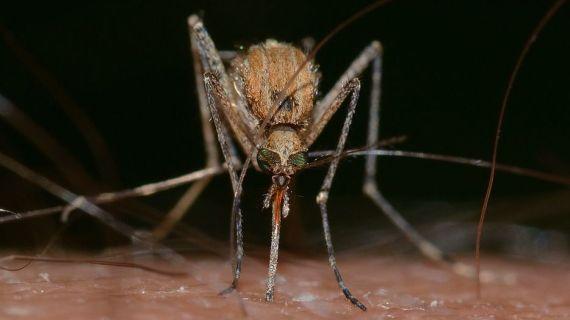 Cara Terbaik untuk Menghindari Gigitan Nyamuk